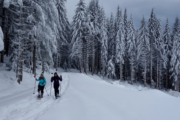 Toutle State Forest snowshoe trek